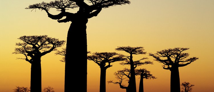 Baobab Eatmovefeel