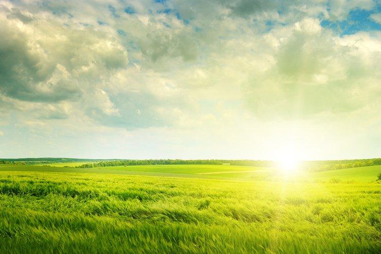 Weizengrassaft verliert an Gewicht